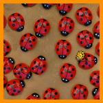 "2° Premio Alessandro Raso : "" Lady Beetle"""