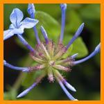 Flower_G.Merlino
